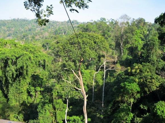 Ziplining in canopy trees