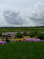 Vineyards in Nape Valley, California