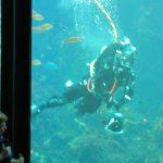 Carmel by the Sea aquarium