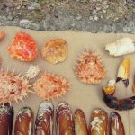 crab backs & pincers