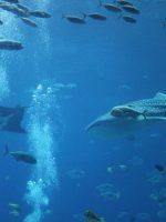 Whale shakes at the Georgia Aquarium