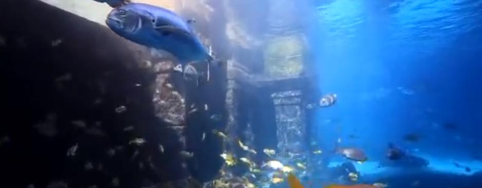 The Dig, Atlantis