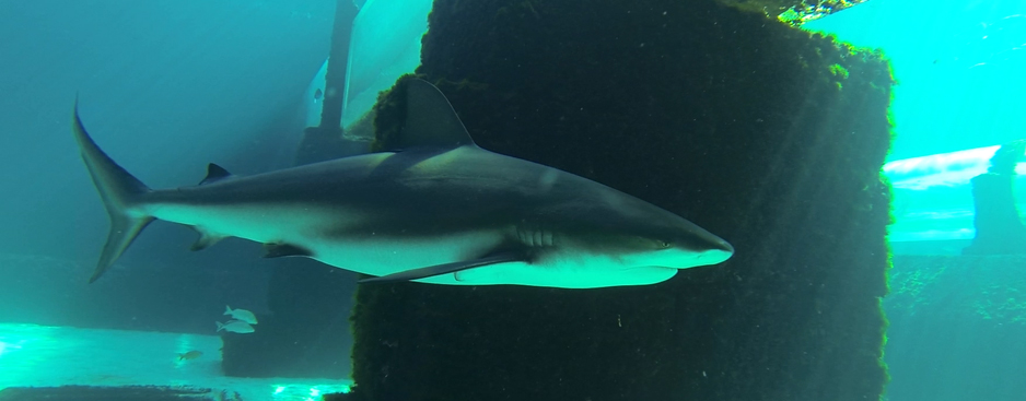 Walking with Sharks Sea Trek