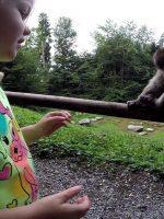 Feeding the Apes in Affenburg, Salem