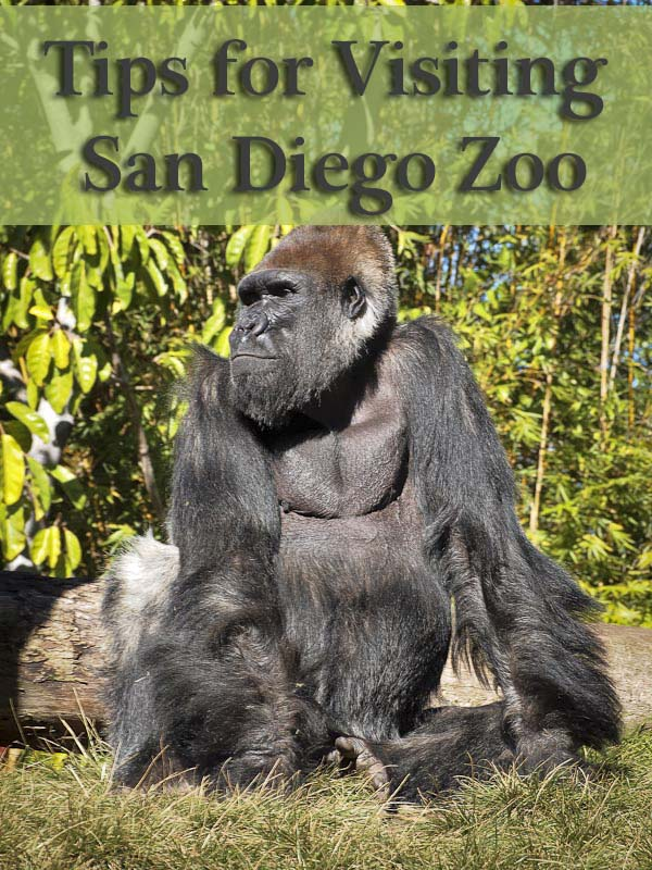 Tips for Visiting San Diego Zoo