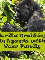 Bwindi Mountain Gorilla, Uganda