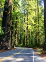 Avenue of the Giants, California