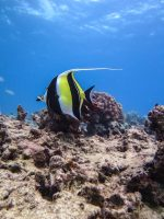 Diving in Oahu with Aqua Zone Scuba Diving and Snorkeling Center