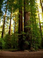 Richardson Grove State Park, Humboldt County, California