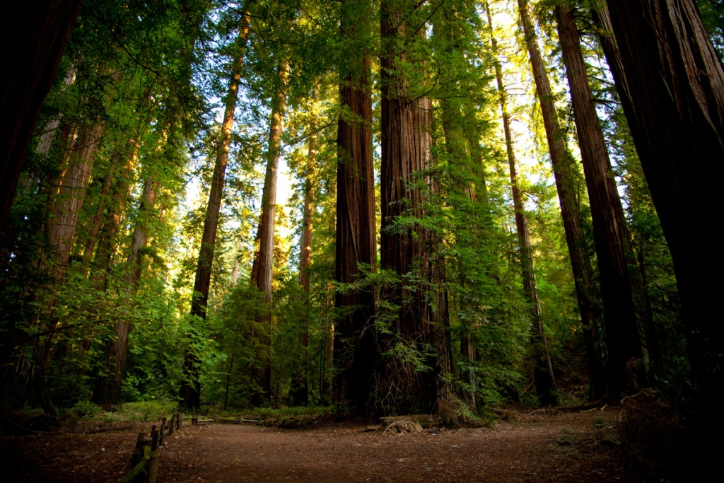 Richardson Grove State Park, Humboldt County, California