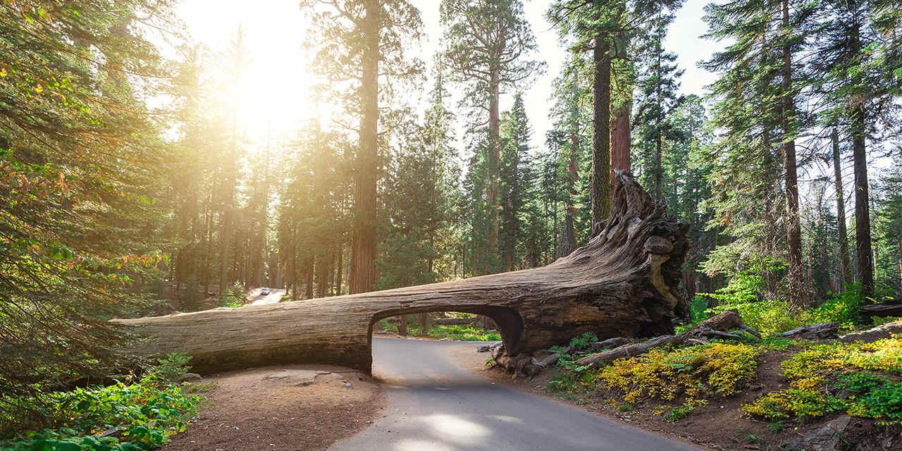 nationalparks_sequoiakingsnationalparks