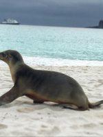 Galapagos Bucket List