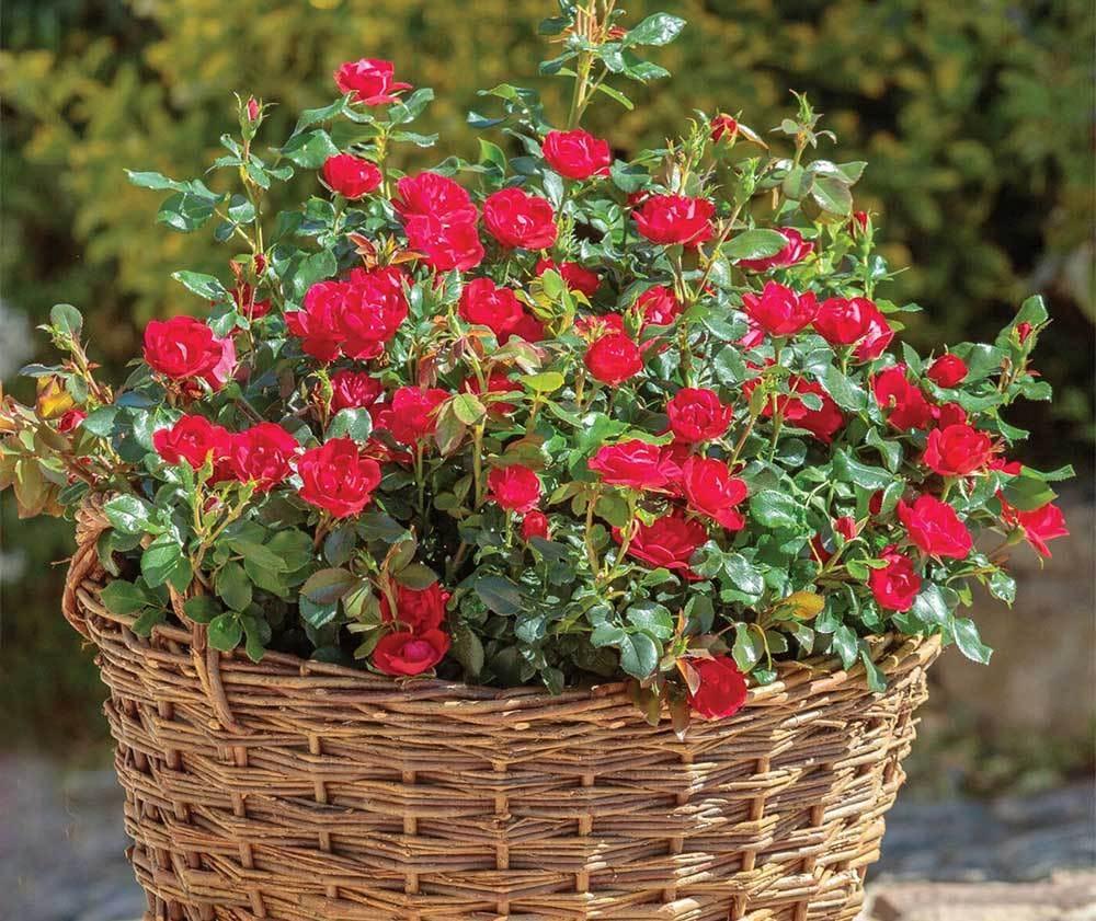 bucket list garden needs
